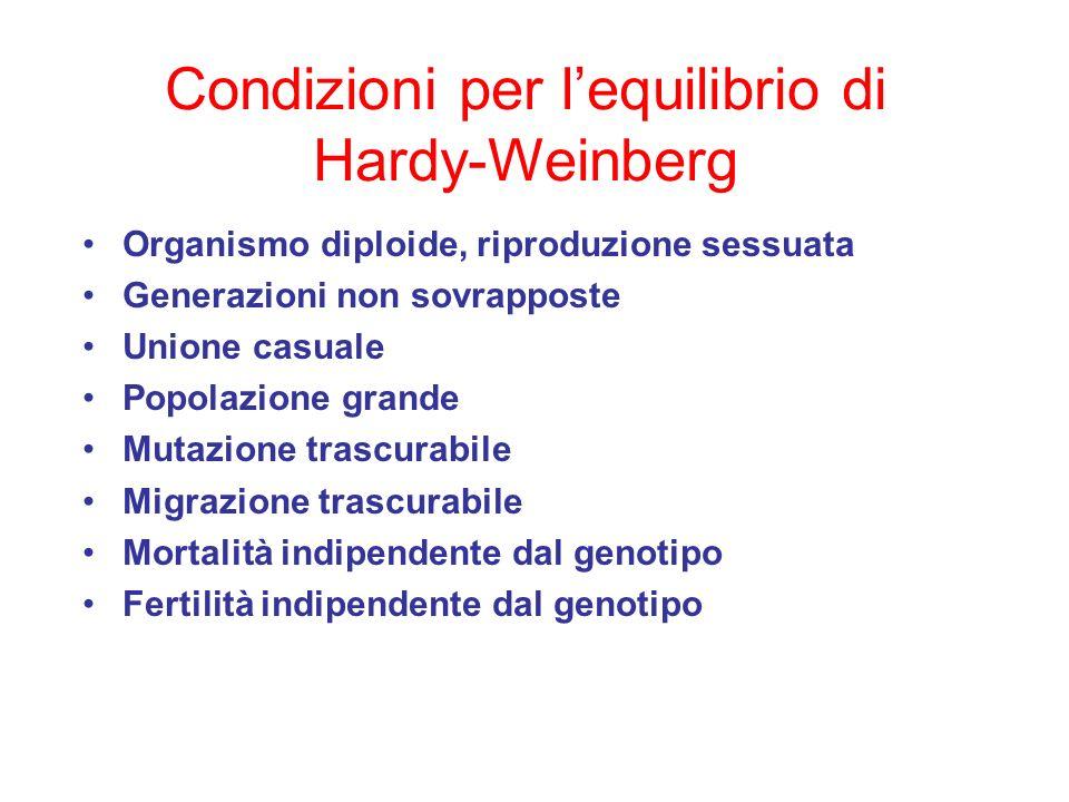 Condizioni per lequilibrio di Hardy-Weinberg Organismo diploide, riproduzione sessuata Generazioni non sovrapposte Unione casuale Popolazione grande M