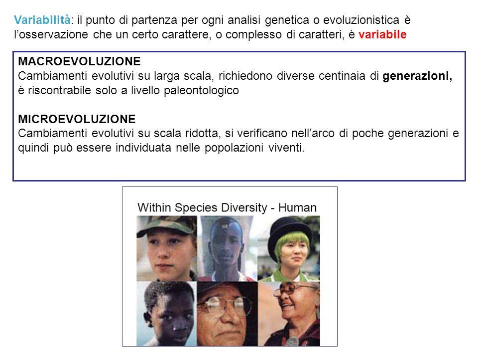 MACROEVOLUZIONE Cambiamenti evolutivi su larga scala, richiedono diverse centinaia di generazioni, è riscontrabile solo a livello paleontologico MICRO