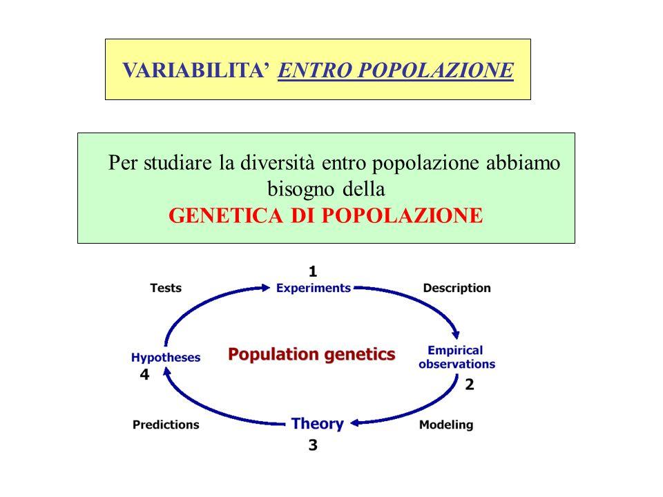 VARIABILITA ENTRO POPOLAZIONE Per studiare la diversità entro popolazione abbiamo bisogno della GENETICA DI POPOLAZIONE