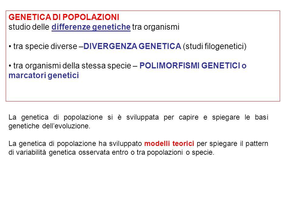 GENETICA DI POPOLAZIONI studio delle differenze genetiche tra organismi tra specie diverse –DIVERGENZA GENETICA (studi filogenetici) tra organismi del