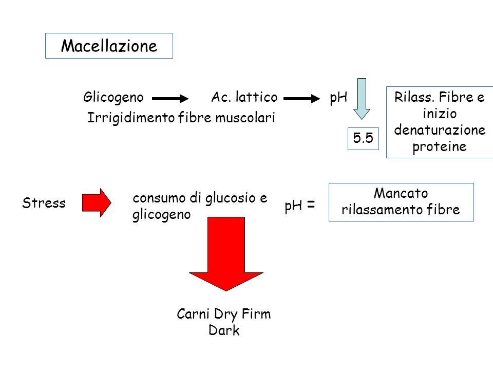Macellazione GlicogenoAc. latticopH Irrigidimento fibre muscolari 5.5 Rilass. Fibre e inizio denaturazione proteine Stress consumo di glucosio e glico