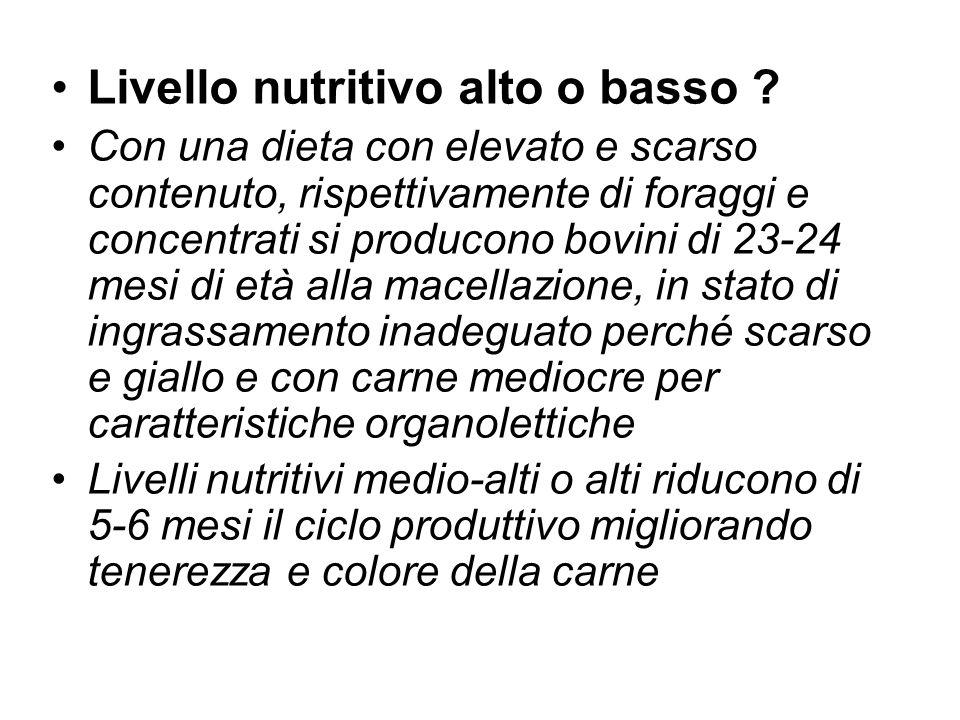 Livello nutritivo alto o basso ? Con una dieta con elevato e scarso contenuto, rispettivamente di foraggi e concentrati si producono bovini di 23-24 m