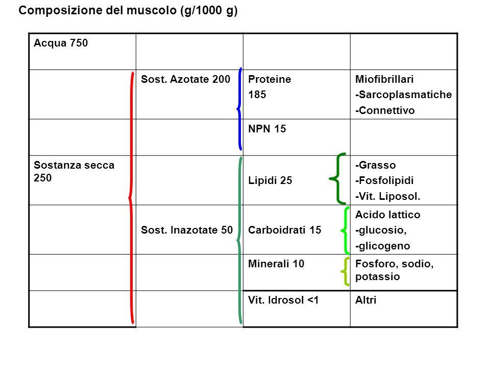 Composizione del muscolo (g/1000 g) Acqua 750 Sost. Azotate 200Proteine 185 Miofibrillari -Sarcoplasmatiche -Connettivo NPN 15 Sostanza secca 250 Lipi