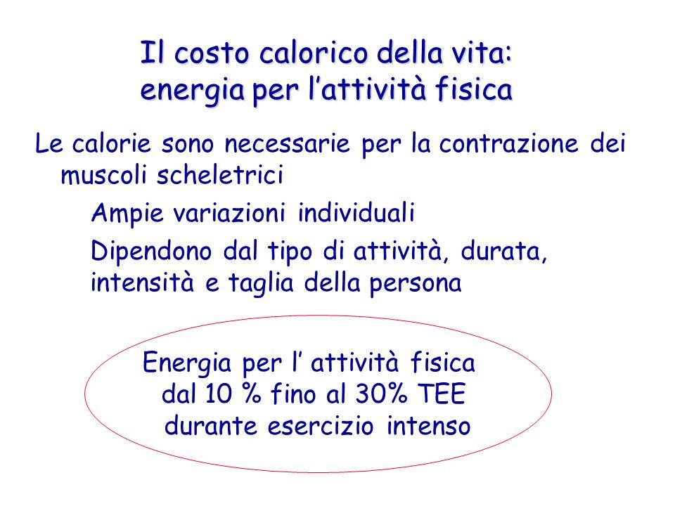 Il costo calorico della vita: energia per lattività fisica Le calorie sono necessarie per la contrazione dei muscoli scheletrici – Ampie variazioni in