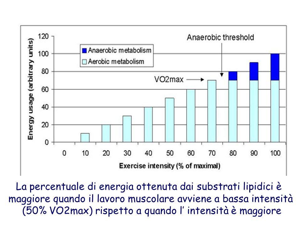 La percentuale di energia ottenuta dai substrati lipidici è maggiore quando il lavoro muscolare avviene a bassa intensità (50% VO2max) rispetto a quan