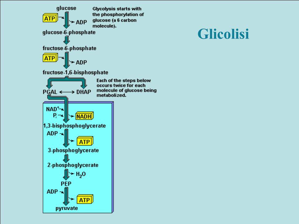 Glicolisi