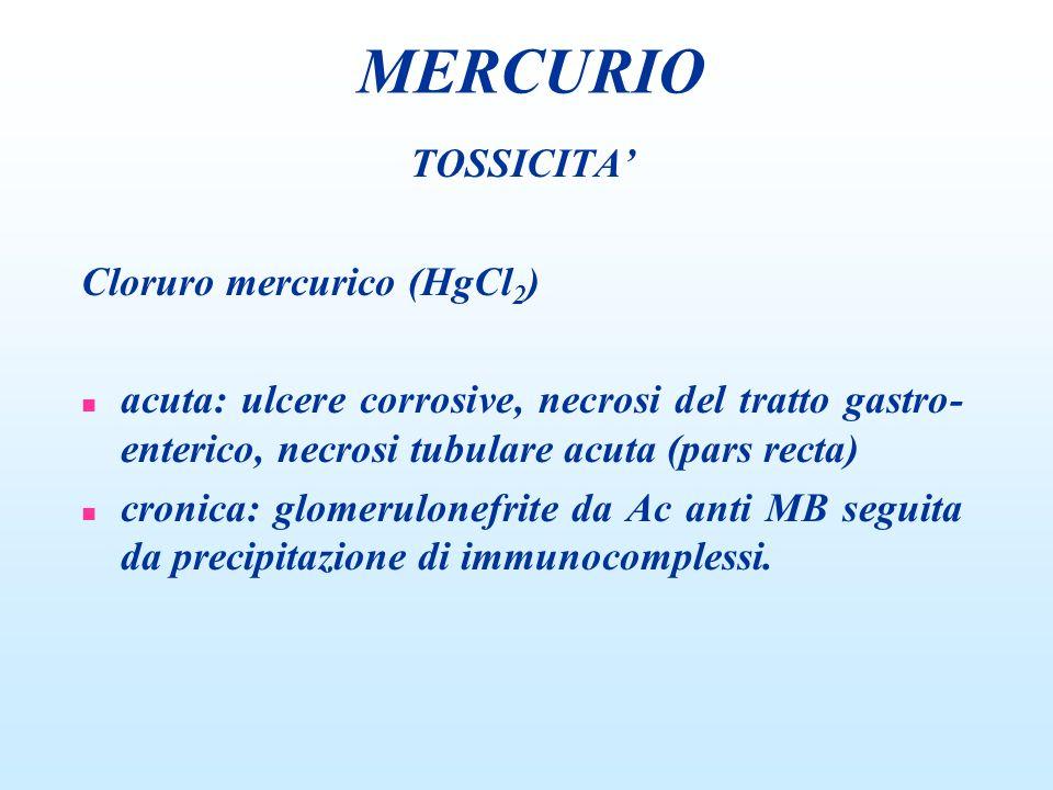 TOSSICITA Cloruro mercurico (HgCl 2 ) n acuta: ulcere corrosive, necrosi del tratto gastro- enterico, necrosi tubulare acuta (pars recta) n cronica: g