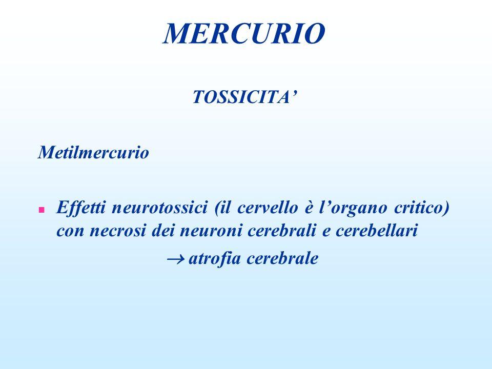 TOSSICITA Metilmercurio n Effetti neurotossici (il cervello è lorgano critico) con necrosi dei neuroni cerebrali e cerebellari atrofia cerebrale MERCU
