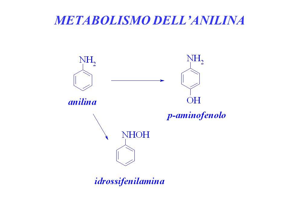 METABOLISMO DELLANILINA