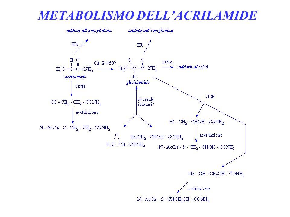 POSSIBILITA DI DOSAGGIO Nel sangue Nelle urine come mercapturato Addotti allemoglobina (acrilamide e glicidamide) Addotti al DNA (glicidamide) ACRILAMIDE