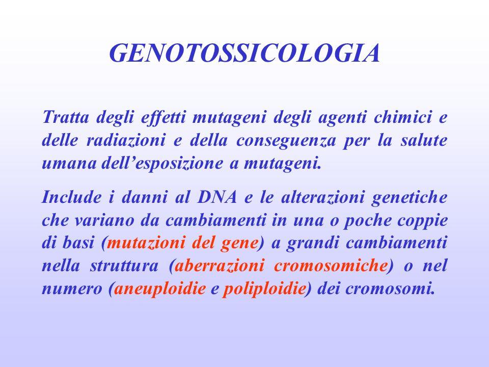 GENOTOSSICOLOGIA Tratta degli effetti mutageni degli agenti chimici e delle radiazioni e della conseguenza per la salute umana dellesposizione a mutag