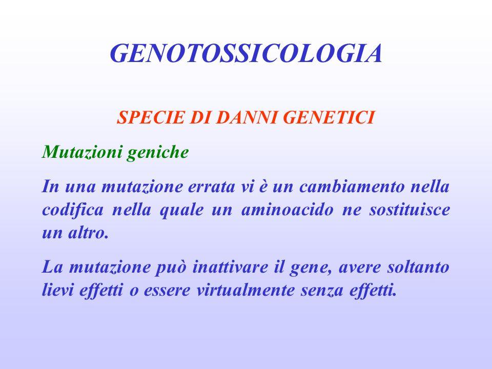 GENOTOSSICOLOGIA SPECIE DI DANNI GENETICI Mutazioni geniche In una mutazione errata vi è un cambiamento nella codifica nella quale un aminoacido ne so