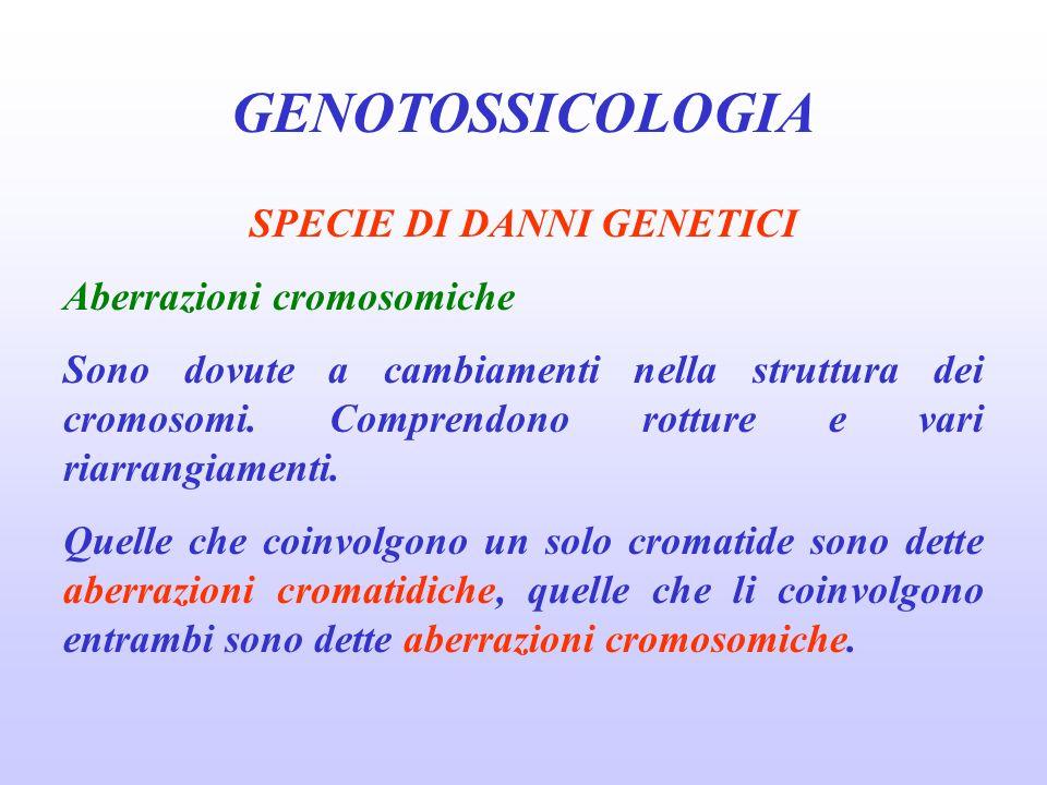GENOTOSSICOLOGIA SPECIE DI DANNI GENETICI Aberrazioni cromosomiche Sono dovute a cambiamenti nella struttura dei cromosomi. Comprendono rotture e vari