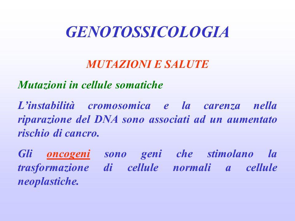 GENOTOSSICOLOGIA MUTAZIONI E SALUTE Mutazioni in cellule somatiche Linstabilità cromosomica e la carenza nella riparazione del DNA sono associati ad u