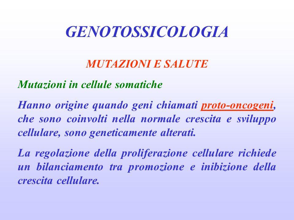 GENOTOSSICOLOGIA MUTAZIONI E SALUTE Mutazioni in cellule somatiche Hanno origine quando geni chiamati proto-oncogeni, che sono coinvolti nella normale