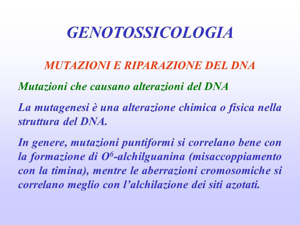 GENOTOSSICOLOGIA MUTAZIONI E RIPARAZIONE DEL DNA Mutazioni che causano alterazioni del DNA La mutagenesi è una alterazione chimica o fisica nella stru
