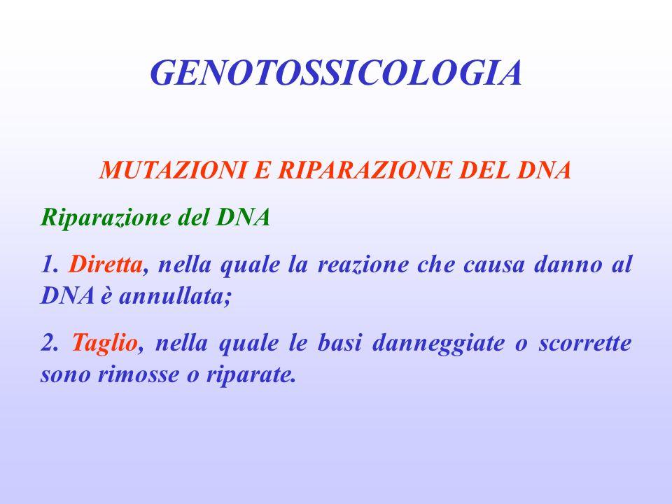 GENOTOSSICOLOGIA MUTAZIONI E RIPARAZIONE DEL DNA Riparazione del DNA 1. Diretta, nella quale la reazione che causa danno al DNA è annullata; 2. Taglio