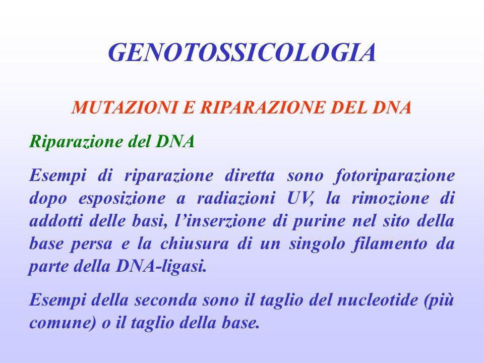 GENOTOSSICOLOGIA MUTAZIONI E RIPARAZIONE DEL DNA Riparazione del DNA Esempi di riparazione diretta sono fotoriparazione dopo esposizione a radiazioni