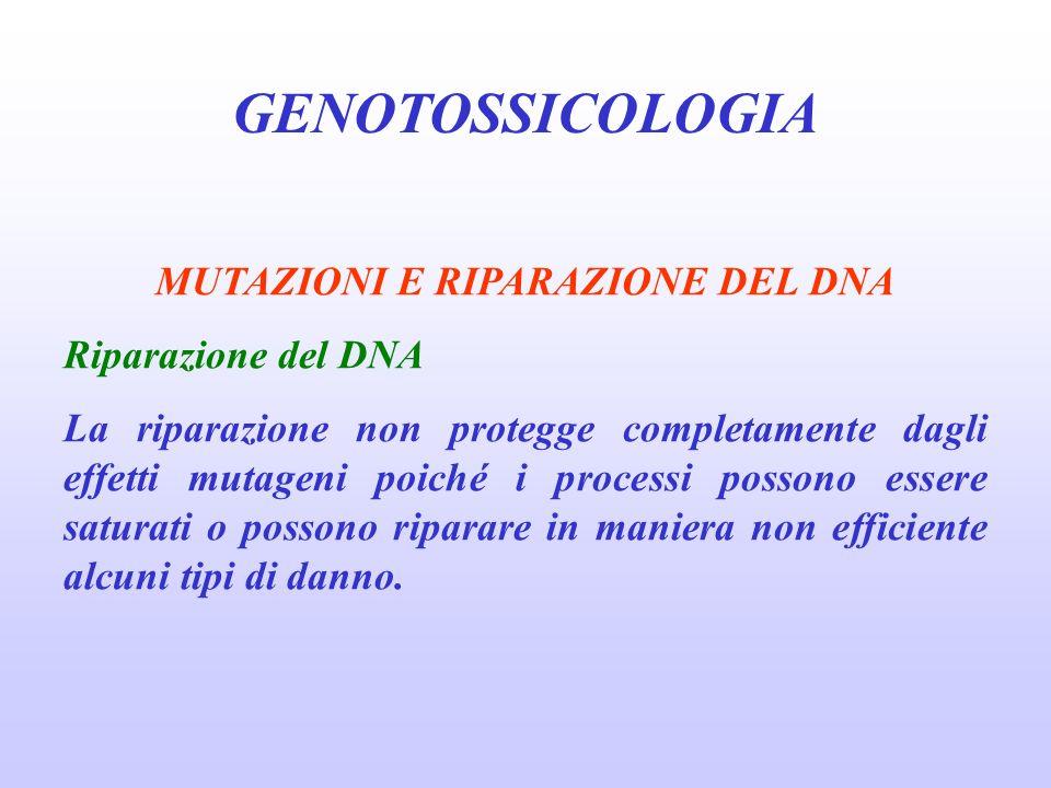 GENOTOSSICOLOGIA MUTAZIONI E RIPARAZIONE DEL DNA Riparazione del DNA La riparazione non protegge completamente dagli effetti mutageni poiché i process