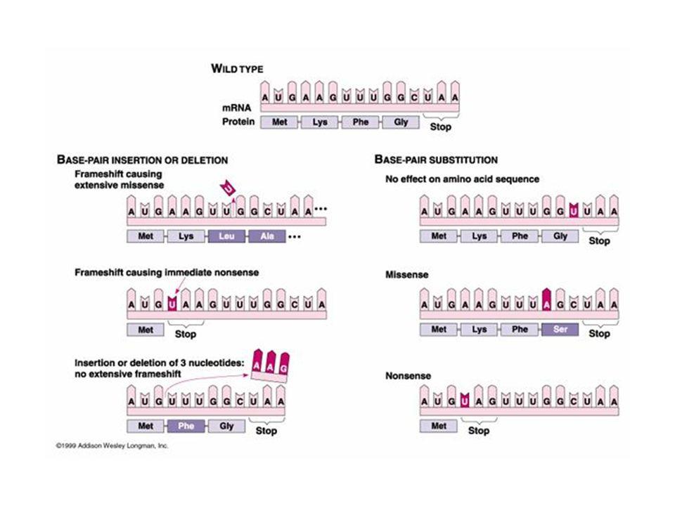 GENOTOSSICOLOGIA SPECIE DI DANNI GENETICI Aberrazioni cromosomiche Sono dovute a cambiamenti nella struttura dei cromosomi.