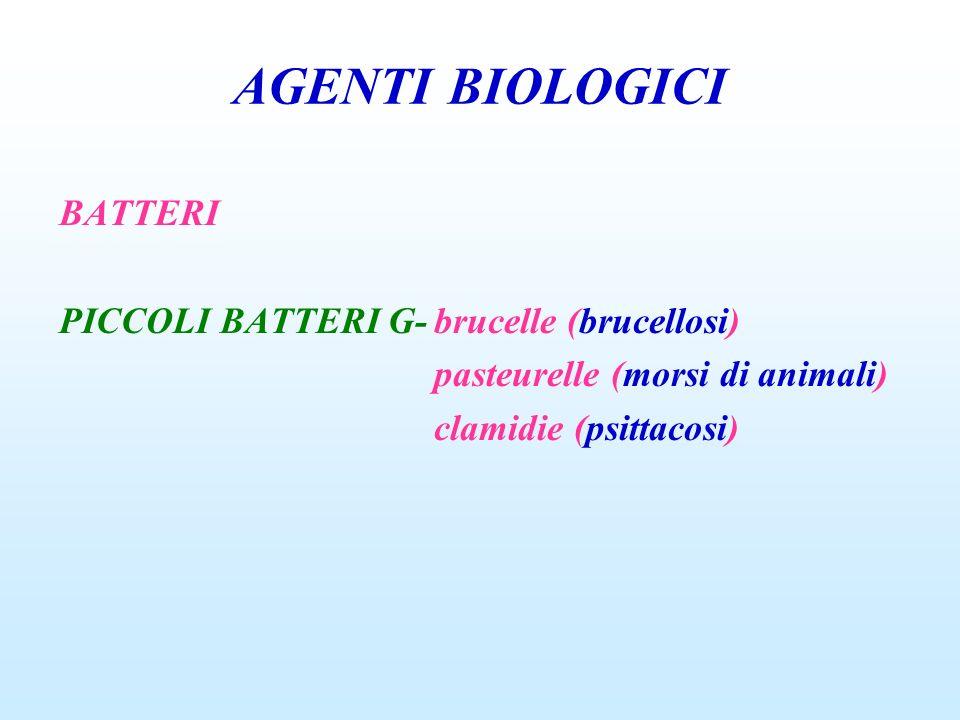 AGENTI BIOLOGICI BATTERI PICCOLI BATTERI G-brucelle (brucellosi) pasteurelle (morsi di animali) clamidie (psittacosi)