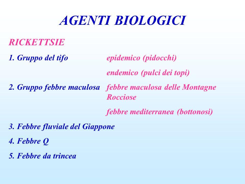 AGENTI BIOLOGICI RICKETTSIE 1. Gruppo del tifoepidemico (pidocchi) endemico (pulci dei topi) 2. Gruppo febbre maculosafebbre maculosa delle Montagne R
