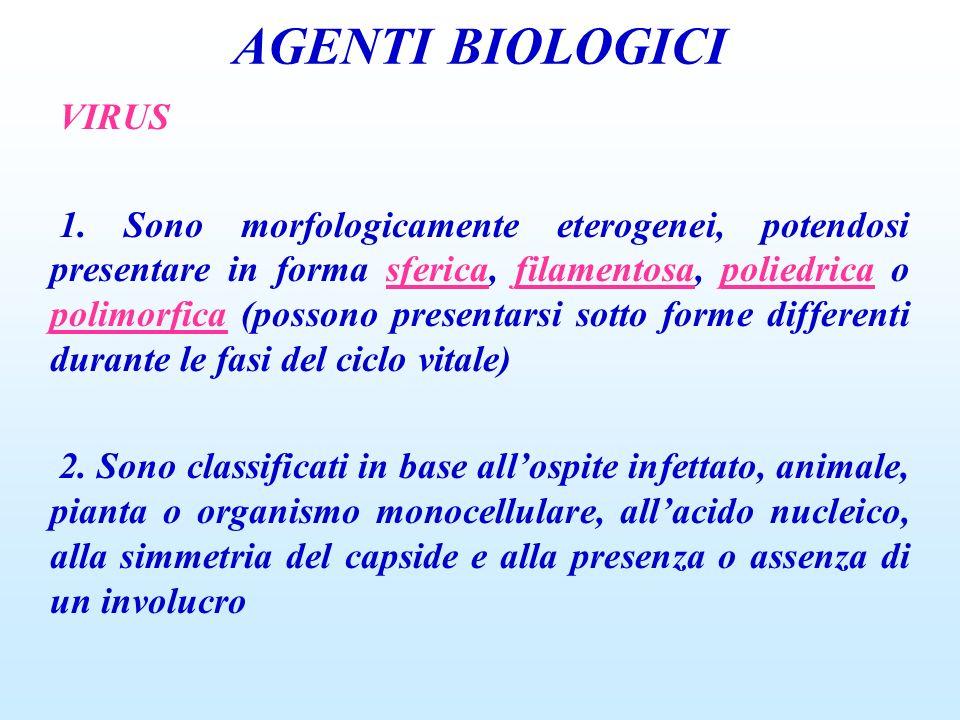 AGENTI BIOLOGICI VIRUS 1. Sono morfologicamente eterogenei, potendosi presentare in forma sferica, filamentosa, poliedrica o polimorfica (possono pres