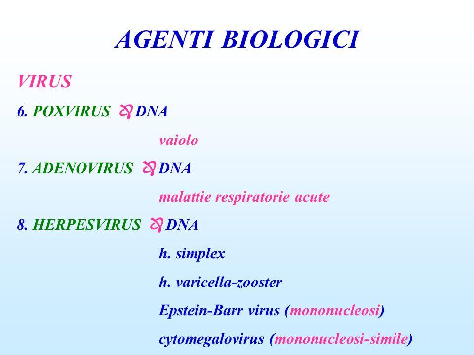 AGENTI BIOLOGICI VIRUS 6. POXVIRUS DNA vaiolo 7. ADENOVIRUS DNA malattie respiratorie acute 8. HERPESVIRUS DNA h. simplex h. varicella-zooster Epstein