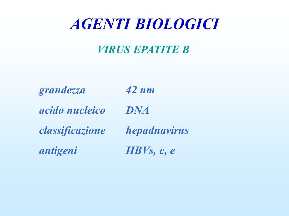 AGENTI BIOLOGICI VIRUS EPATITE B grandezza42 nm acido nucleicoDNA classificazionehepadnavirus antigeniHBVs, c, e