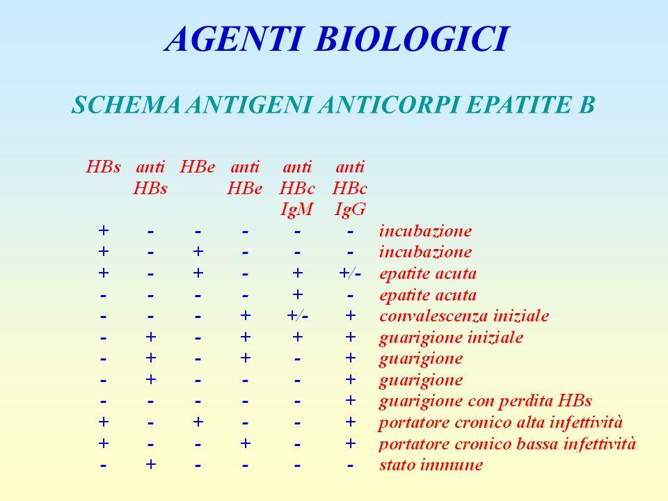 AGENTI BIOLOGICI SCHEMA ANTIGENI ANTICORPI EPATITE B