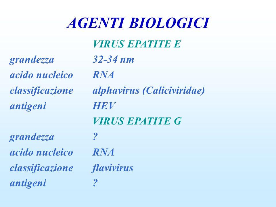 AGENTI BIOLOGICI VIRUS EPATITE E grandezza32-34 nm acido nucleicoRNA classificazionealphavirus (Caliciviridae) antigeniHEV VIRUS EPATITE G grandezza?