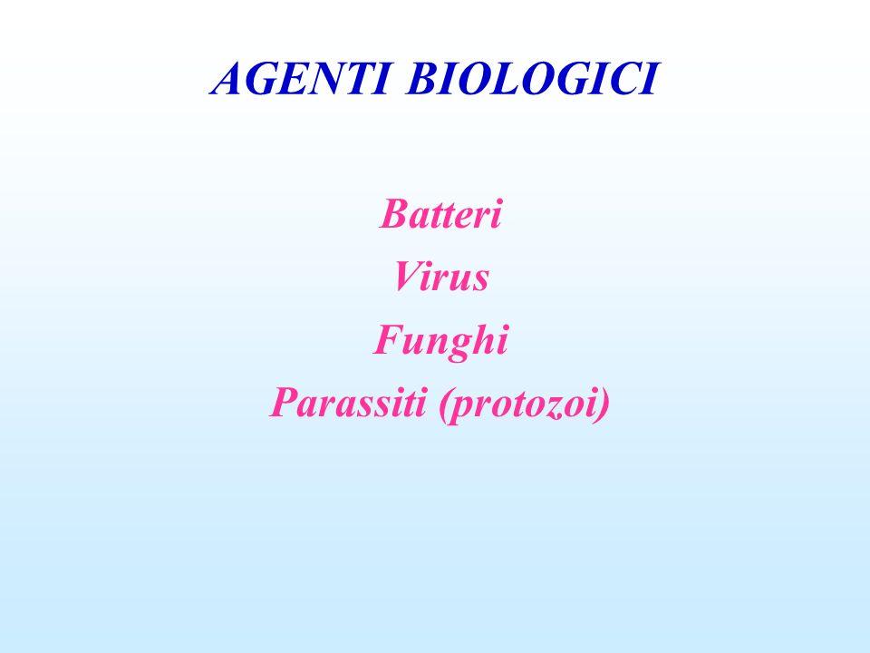 AGENTI BIOLOGICI BATTERI Ciascun membro della classe dei procarioti dotato di singolo cromosoma, senza membrana nucleare e la parete cellulare rigida formata da peptidoglicani.
