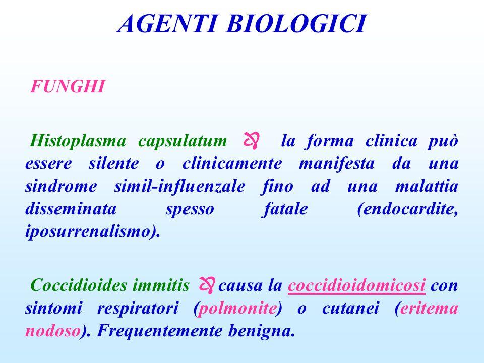AGENTI BIOLOGICI FUNGHI Histoplasma capsulatum la forma clinica può essere silente o clinicamente manifesta da una sindrome simil-influenzale fino ad