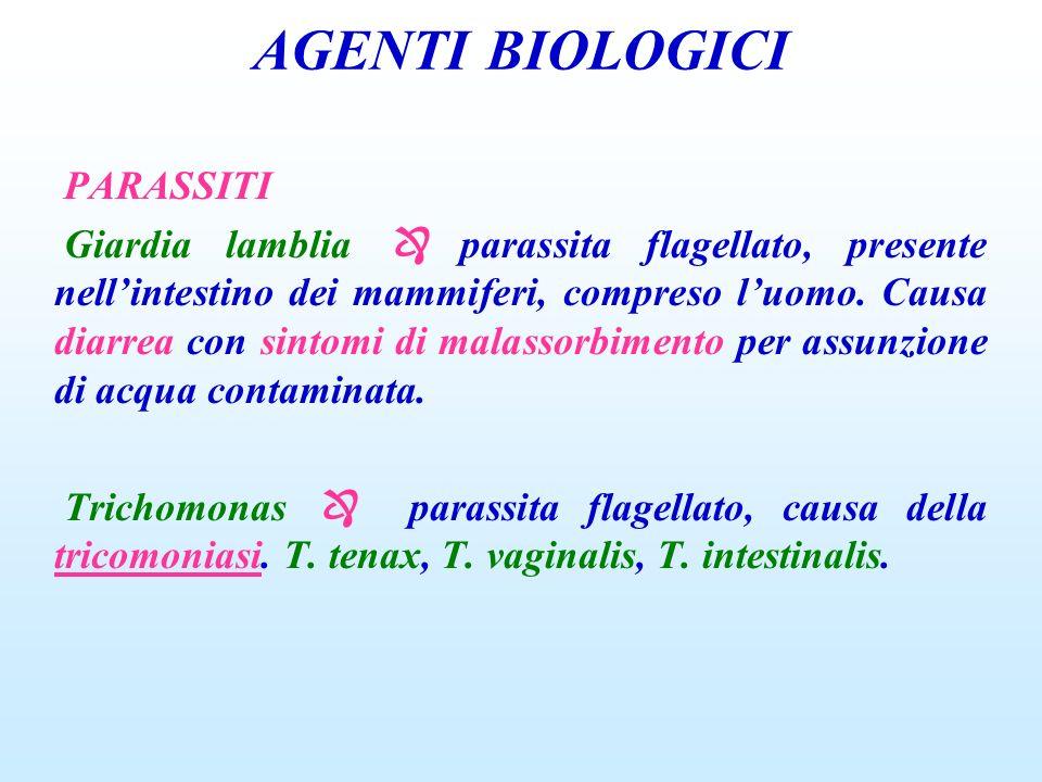AGENTI BIOLOGICI PARASSITI Giardia lamblia parassita flagellato, presente nellintestino dei mammiferi, compreso luomo. Causa diarrea con sintomi di ma