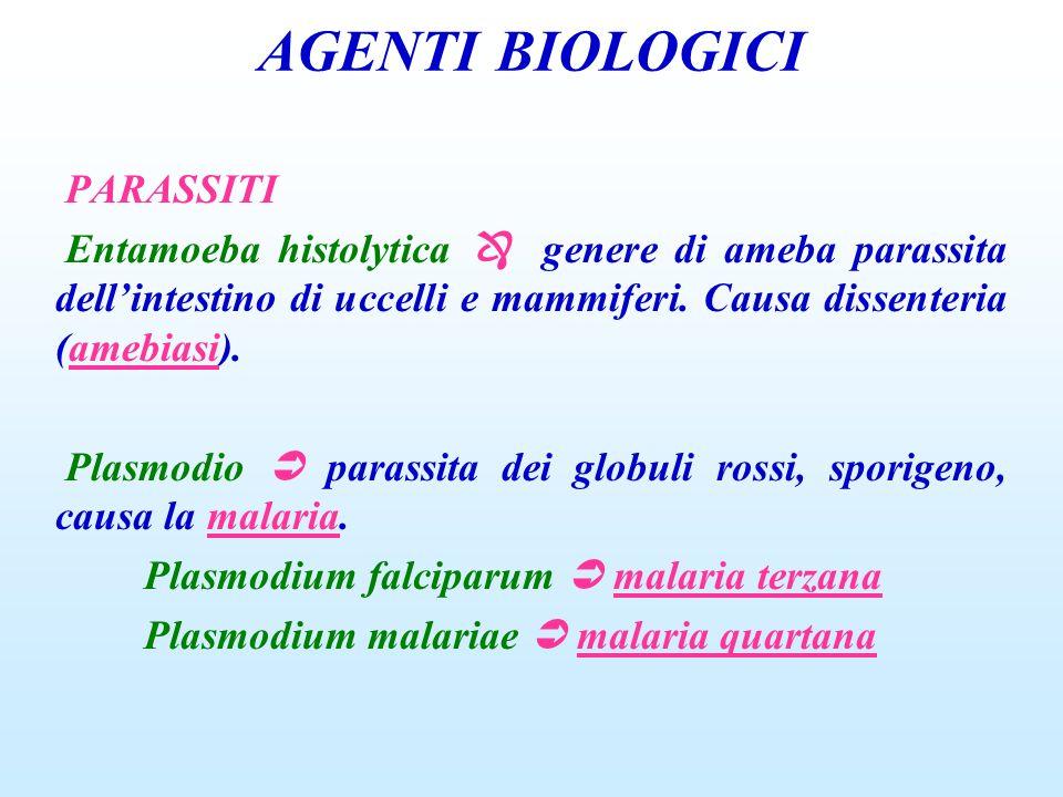 AGENTI BIOLOGICI PARASSITI Entamoeba histolytica genere di ameba parassita dellintestino di uccelli e mammiferi. Causa dissenteria (amebiasi). Plasmod