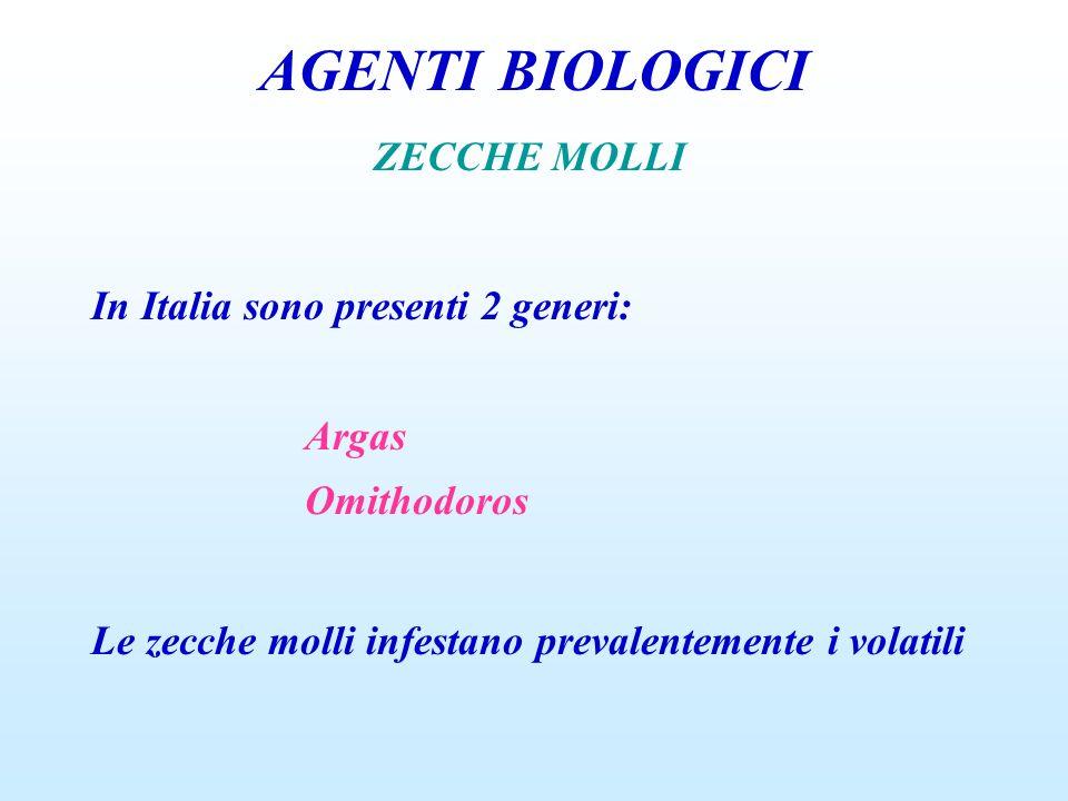 AGENTI BIOLOGICI ZECCHE MOLLI In Italia sono presenti 2 generi: Argas Omithodoros Le zecche molli infestano prevalentemente i volatili