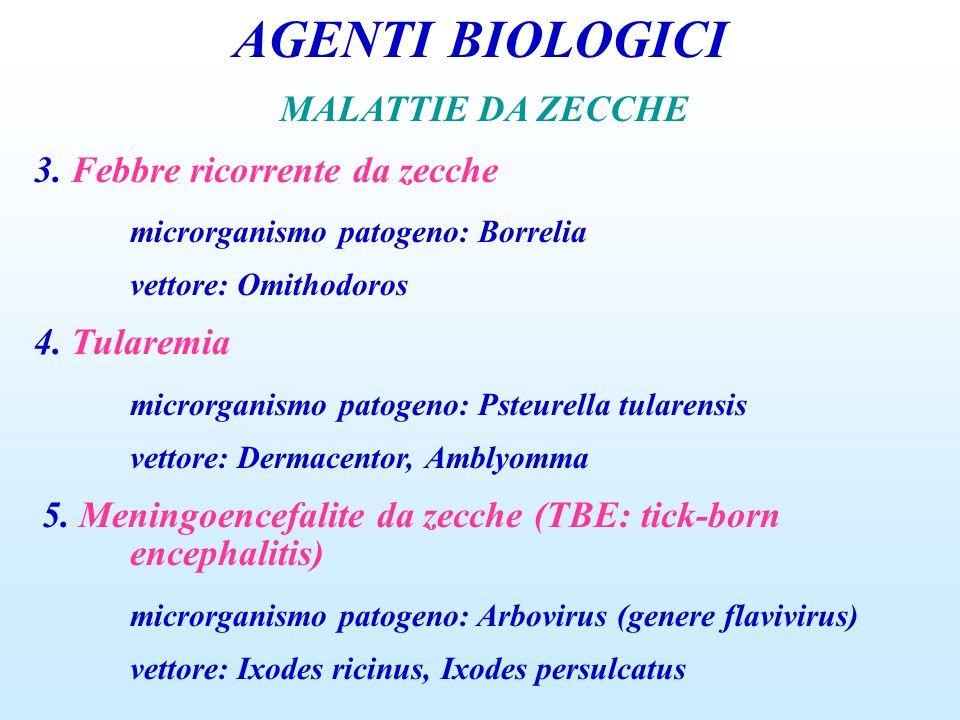AGENTI BIOLOGICI MALATTIE DA ZECCHE 3. Febbre ricorrente da zecche microrganismo patogeno: Borrelia vettore: Omithodoros 4. Tularemia microrganismo pa