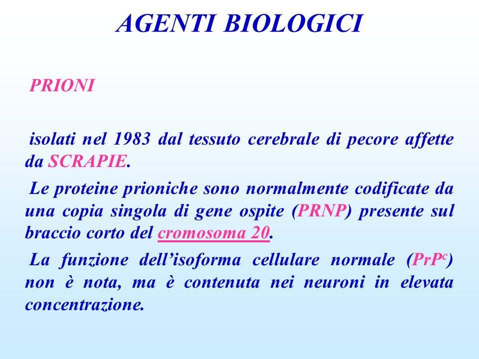 AGENTI BIOLOGICI PRIONI isolati nel 1983 dal tessuto cerebrale di pecore affette da SCRAPIE. Le proteine prioniche sono normalmente codificate da una