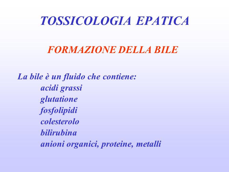 FORMAZIONE DELLA BILE La bile è un fluido che contiene: acidi grassi glutatione fosfolipidi colesterolo bilirubina anioni organici, proteine, metalli