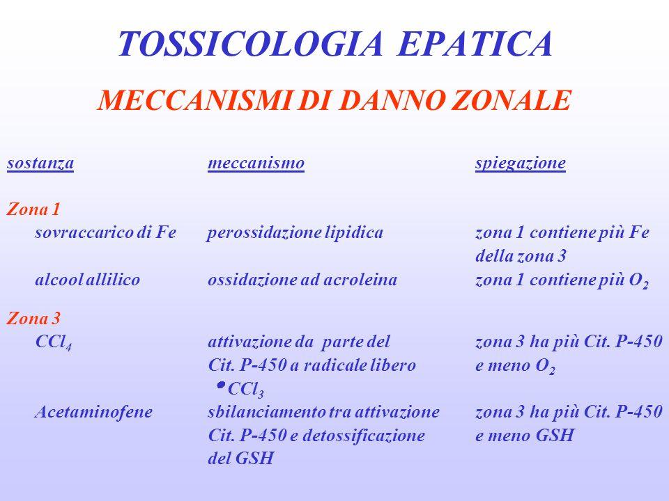MECCANISMI DI DANNO ZONALE sostanzameccanismospiegazione Zona 1 sovraccarico di Feperossidazione lipidica zona 1 contiene più Fe della zona 3 alcool a