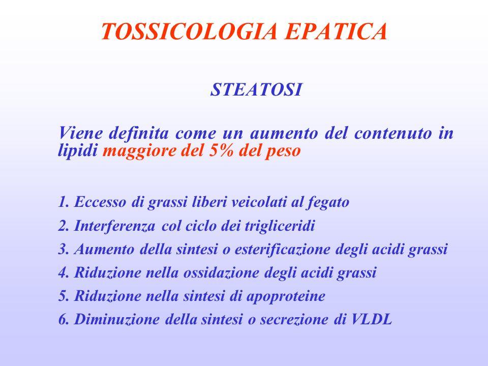 TOSSICOLOGIA EPATICA STEATOSI Viene definita come un aumento del contenuto in lipidi maggiore del 5% del peso 1. Eccesso di grassi liberi veicolati al