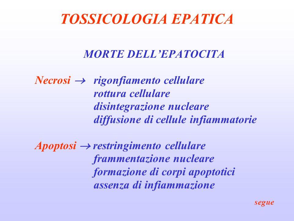 TOSSICOLOGIA EPATICA MORTE DELLEPATOCITA Necrosi rigonfiamento cellulare rottura cellulare disintegrazione nucleare diffusione di cellule infiammatori