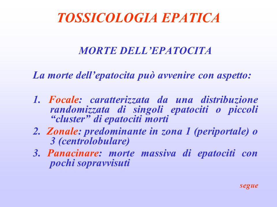 TOSSICOLOGIA EPATICA MORTE DELLEPATOCITA La morte dellepatocita può avvenire con aspetto: 1. Focale: caratterizzata da una distribuzione randomizzata