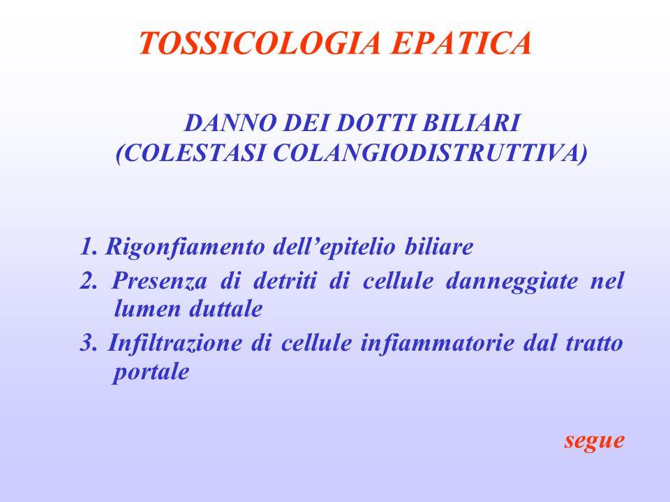 TOSSICOLOGIA EPATICA DANNO DEI DOTTI BILIARI (COLESTASI COLANGIODISTRUTTIVA) 1. Rigonfiamento dellepitelio biliare 2. Presenza di detriti di cellule d