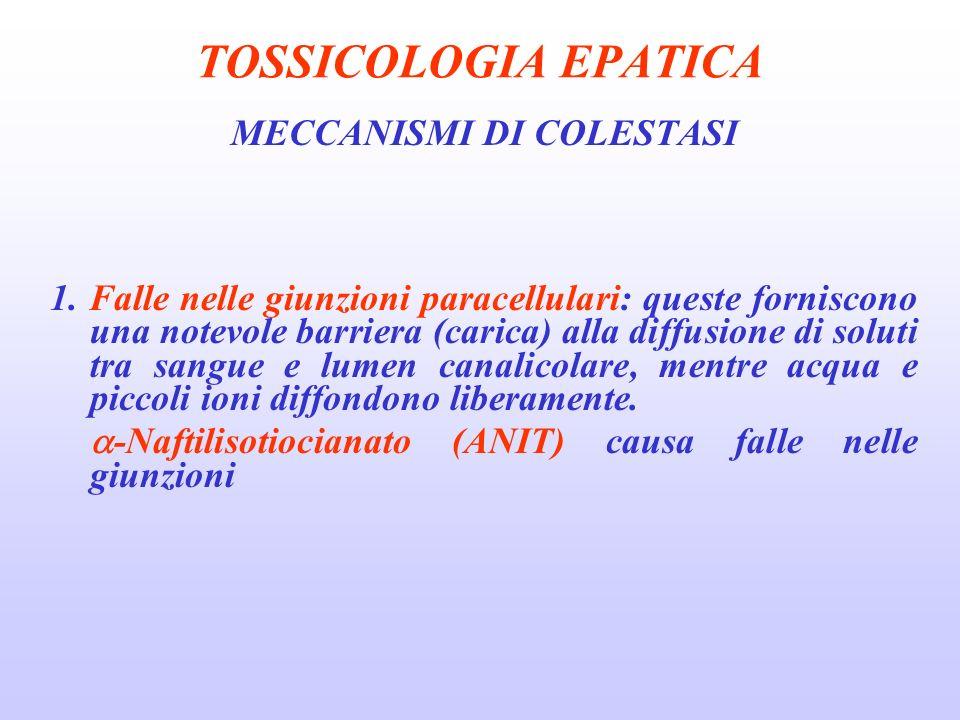 TOSSICOLOGIA EPATICA MECCANISMI DI COLESTASI 1. Falle nelle giunzioni paracellulari: queste forniscono una notevole barriera (carica) alla diffusione