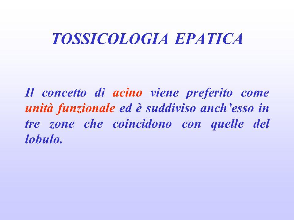 Il concetto di acino viene preferito come unità funzionale ed è suddiviso anchesso in tre zone che coincidono con quelle del lobulo. TOSSICOLOGIA EPAT