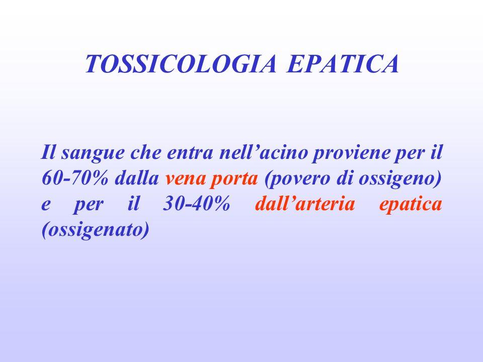 Il sangue che entra nellacino proviene per il 60-70% dalla vena porta (povero di ossigeno) e per il 30-40% dallarteria epatica (ossigenato) TOSSICOLOG