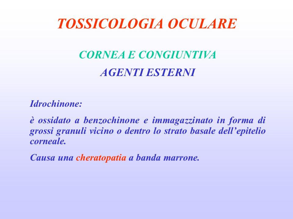 TOSSICOLOGIA OCULARE CORNEA E CONGIUNTIVA AGENTI ESTERNI Idrochinone: è ossidato a benzochinone e immagazzinato in forma di grossi granuli vicino o dentro lo strato basale dellepitelio corneale.