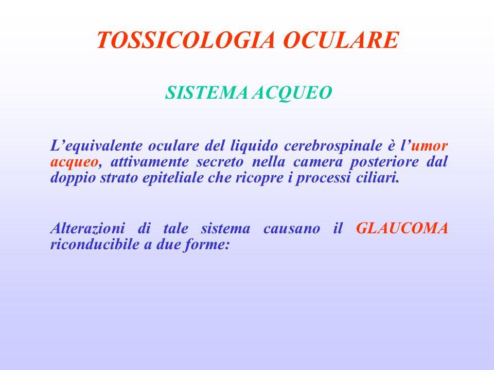 TOSSICOLOGIA OCULARE SISTEMA ACQUEO Lequivalente oculare del liquido cerebrospinale è lumor acqueo, attivamente secreto nella camera posteriore dal doppio strato epiteliale che ricopre i processi ciliari.