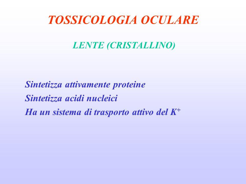 TOSSICOLOGIA OCULARE LENTE (CRISTALLINO) Sintetizza attivamente proteine Sintetizza acidi nucleici Ha un sistema di trasporto attivo del K +